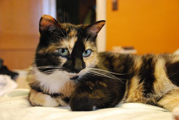 Cat_Real